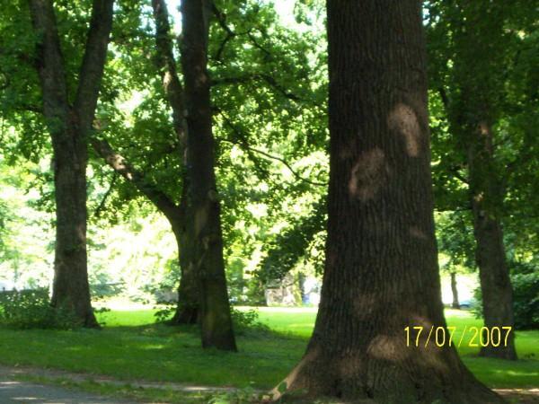 """Bäume im Tiergarten"""